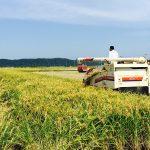 令和2年産米 稲刈りが始まりました!!